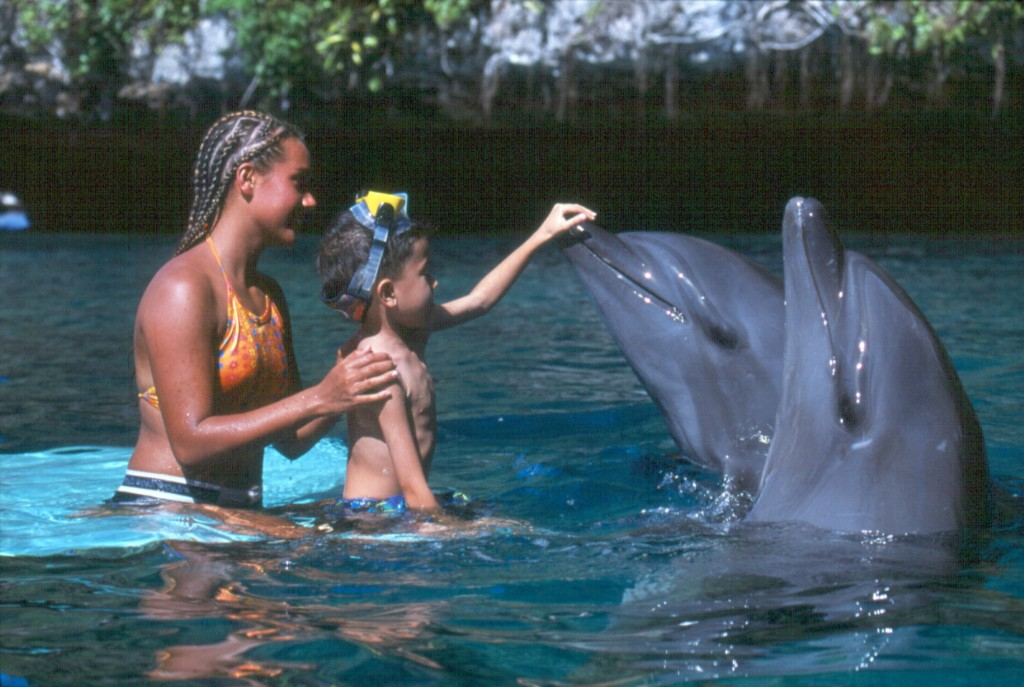 dolphins_mandy-t-etpison